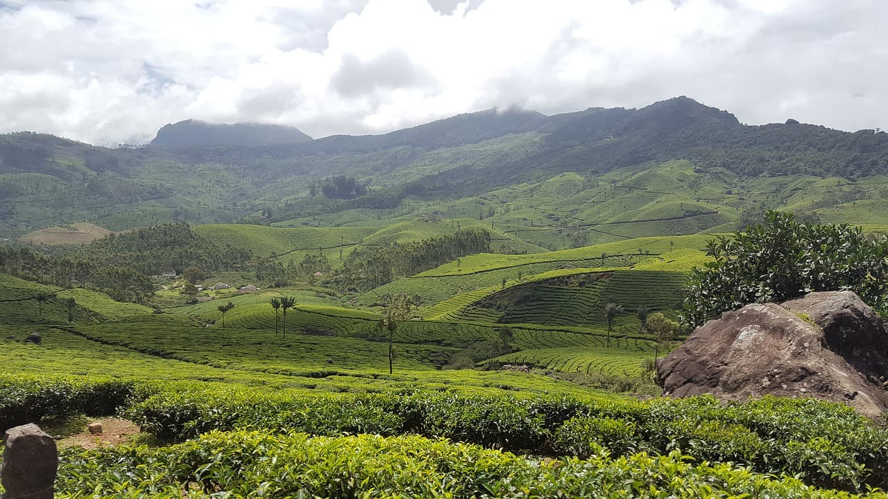 Munnar - Best places to visit in kerala