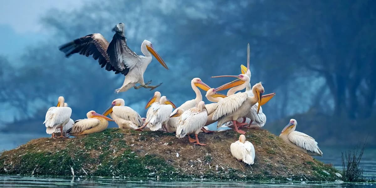Bharatpur-Bird-Sanctuary